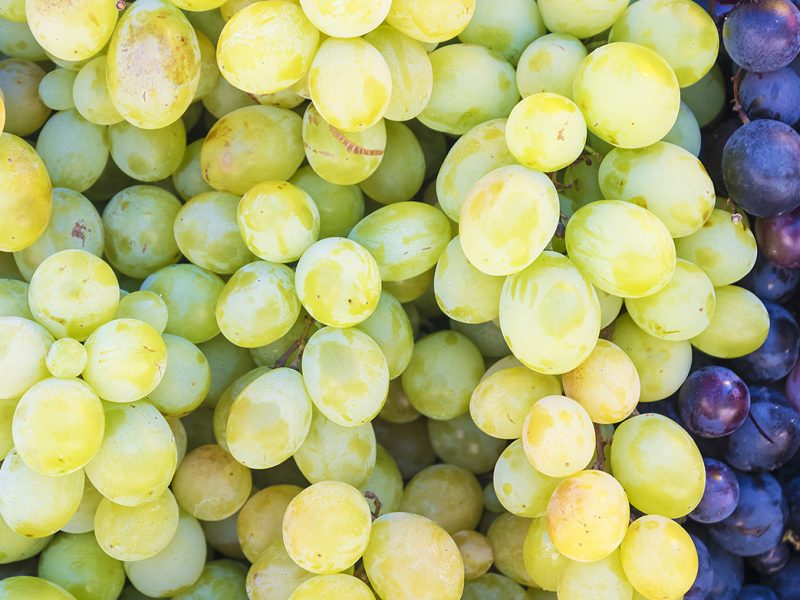 varietà di uva